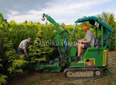 Przygotowanie roślin z gruntu