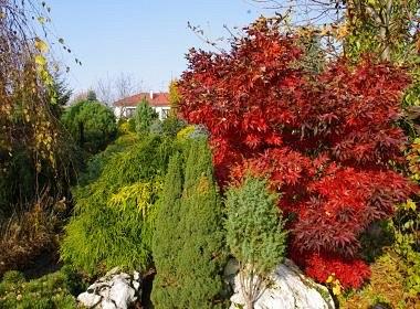 szkolka-drzew-puzon-ogrod-pokazowe-04